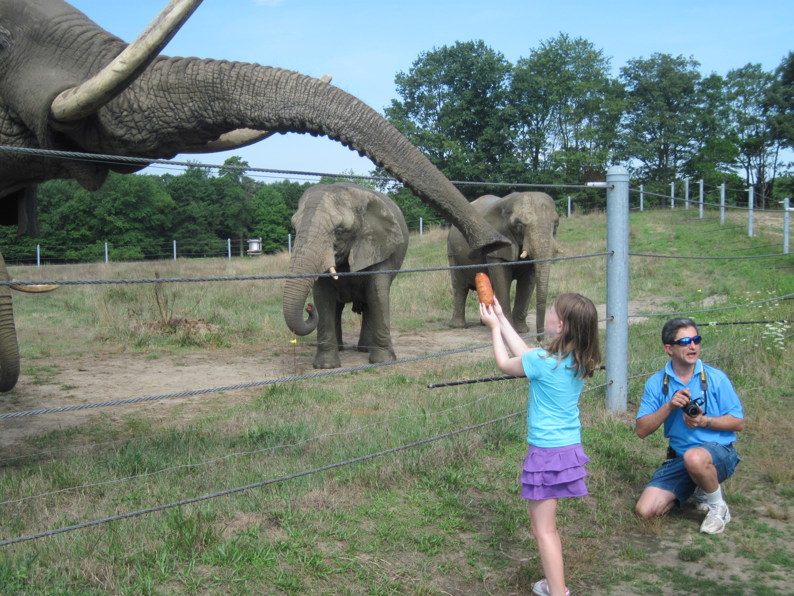 Safari Tour In New Jersey