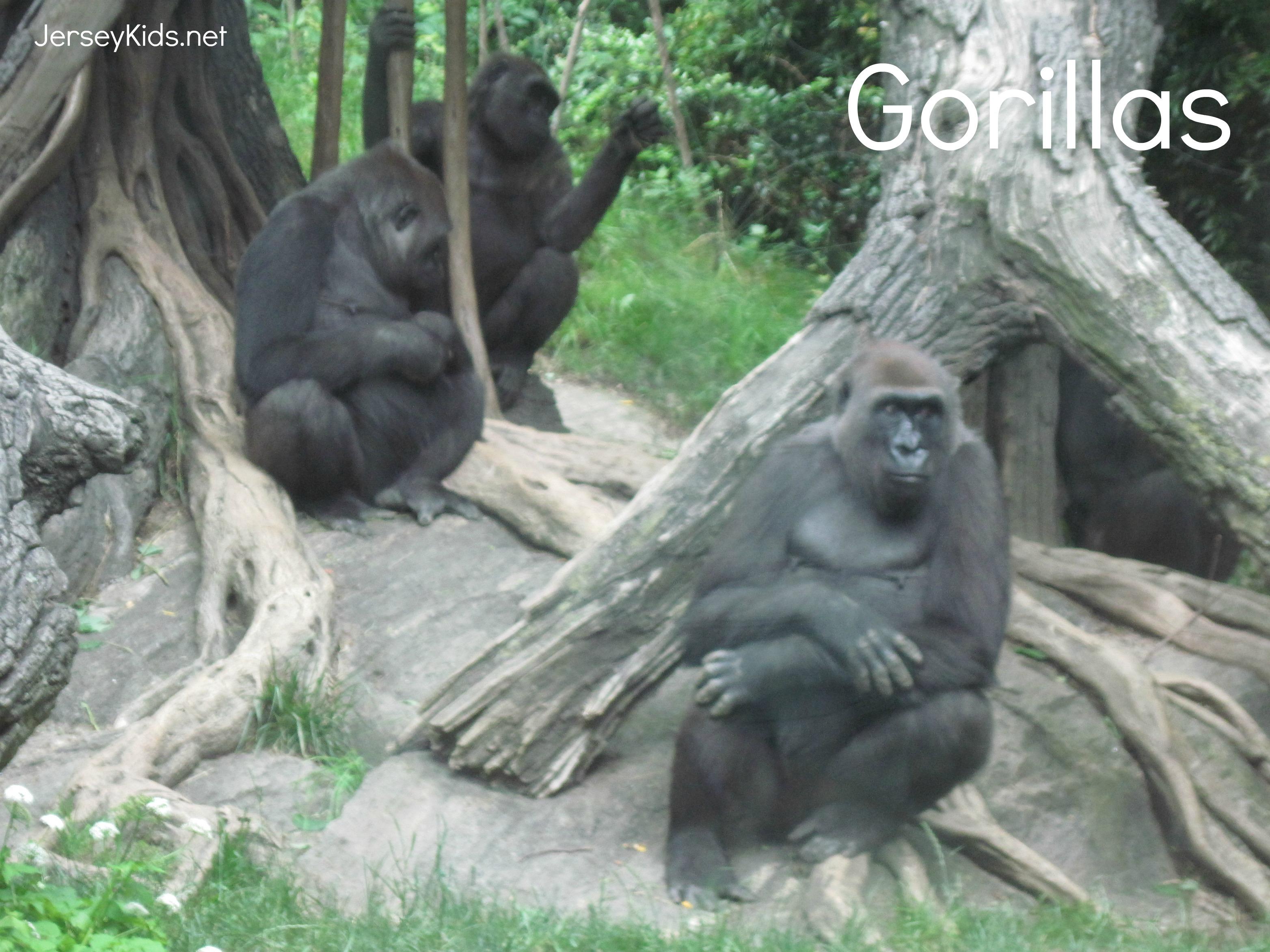 eat bronx zoo eats