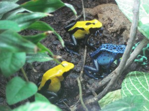 Frogs and other interesting creatures can be found upstairs. Copyright Deborah Abrams Kaplan