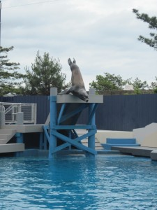 The sea lions perform in NY Aquarium's renovated Aquatheater. Copyright Deborah Abrams Kaplan