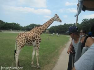 safari13