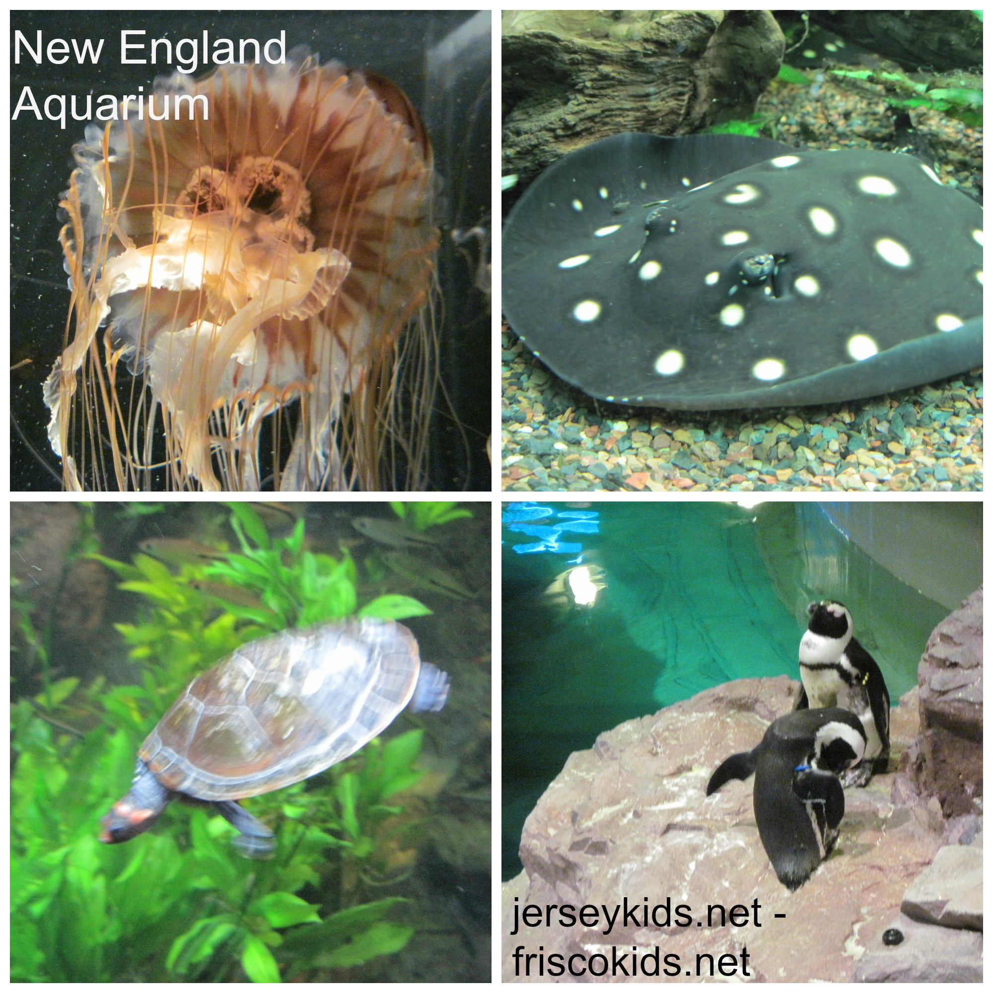 Review all six attractions in citypass boston jersey kids New england aquarium tickets