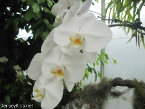 The orchid named after Doris.