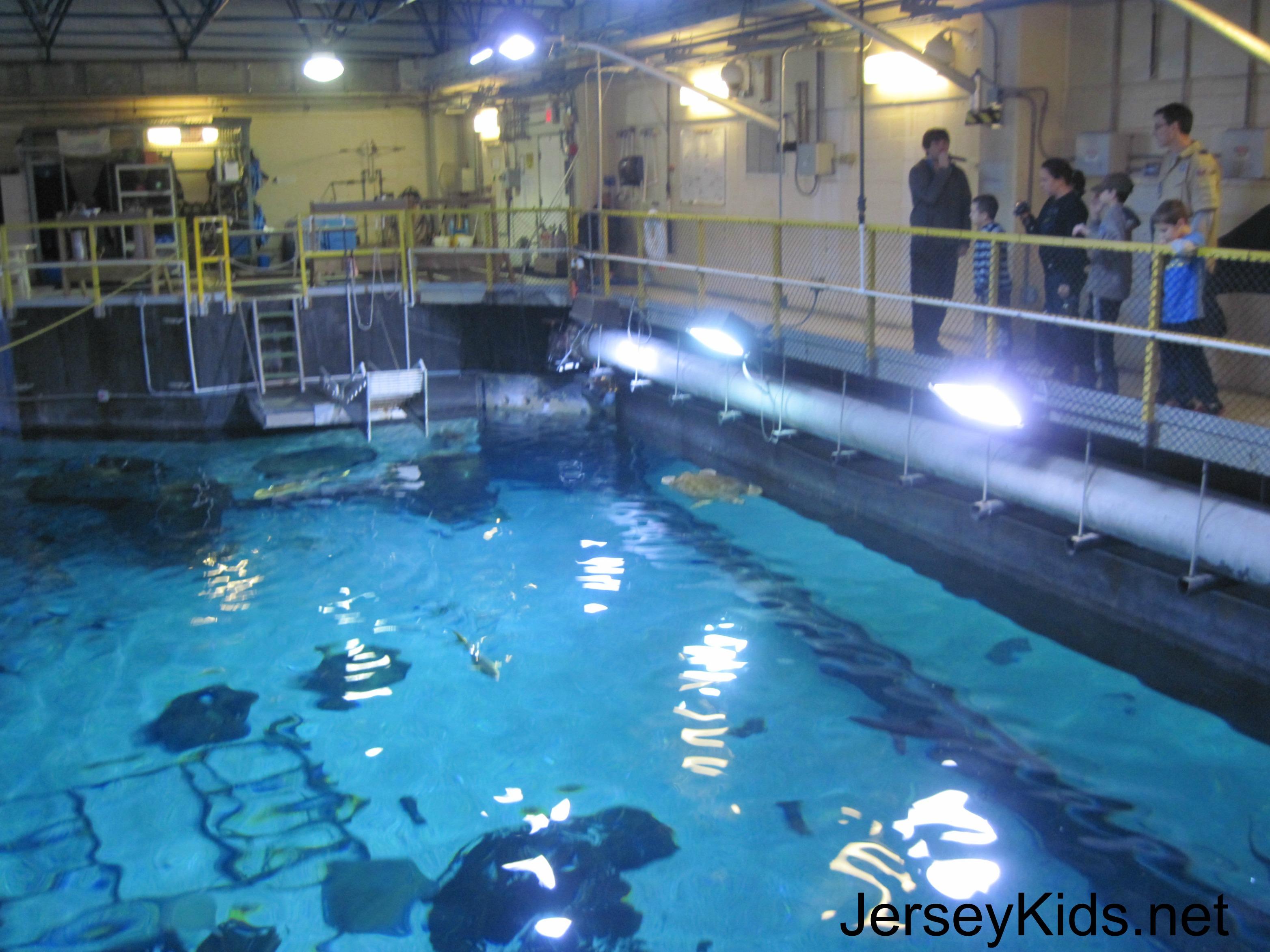 Sleeping With The Fish Overnight At Adventure Aquarium In