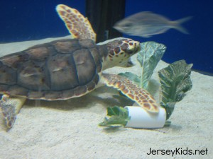 camden turtle