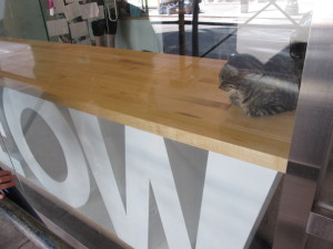 The Meow Parlour in New York City. Photo copyright Deborah Abrams Kaplan.