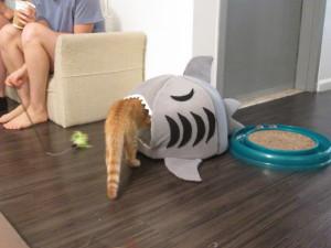 Lots of cute cat toys at the Meow Parlour. Photo copyright Deborah Abrams Kaplan