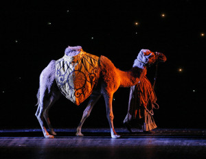 A camel heading to the living nativity scene. Photo courtesy of the Rockettes.
