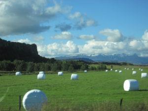 Wrapped hay bales. Copyright Deborah Abrams Kaplan