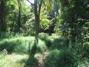 It's a short, but pretty walk to the stream. Copyright Deborah Abrams Kaplan