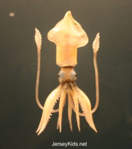 One of 700 glass marine animals.